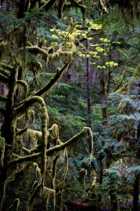CALL OF THE WILD:  Stalking the Perfect Nature Shot with Art Wolfe in the Breathtaking Rainforests of the Olympic Peninsula